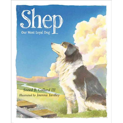 Shep: Our Most Loyal Dog