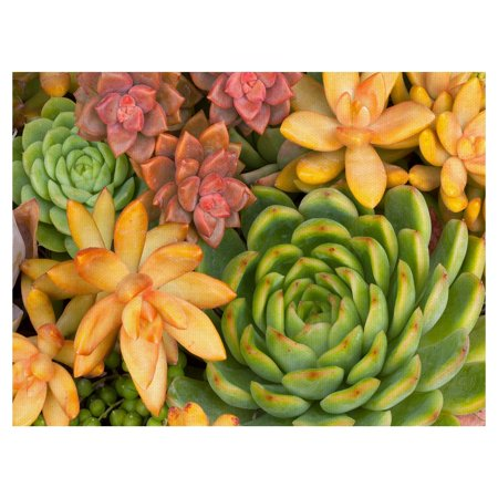 Masterpiece Art Gallery Desert Succulent Colors by Robin Constable Hanson Wrapped Canvas Photo Art Print - Multi-color