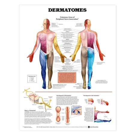 Dermatomes Anatomical Chart-Paper (Anatomical Chart Series)