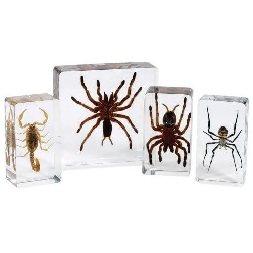Scorpion and Spider Set (Set of 4)