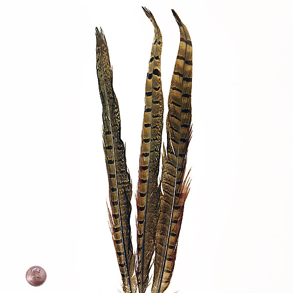 Natural Ringneck Pheasant Sidetail by Paper Mart