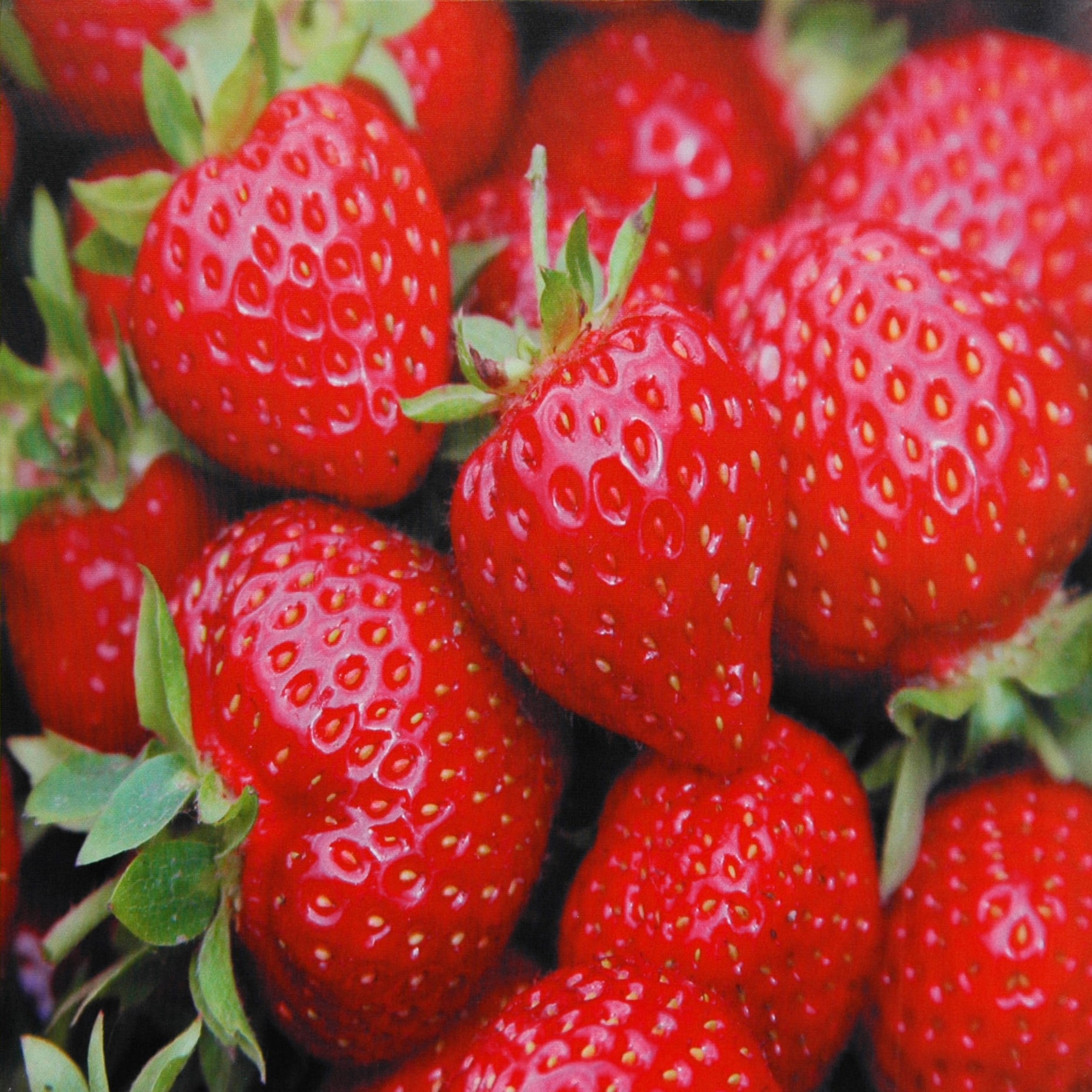 Oriental Home Strawberries Canvas Wall Art