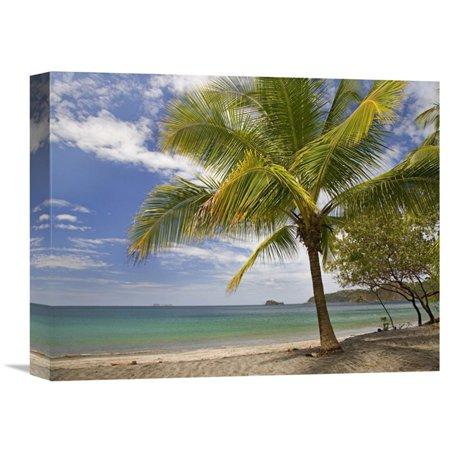 Global Gallery Palm Trees Line Penca Beach Costa Rica Wall Art