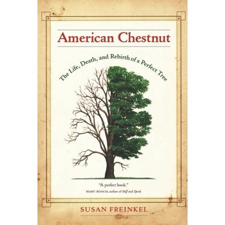American Chestnut : The Life, Death, and Rebirth of a Perfect Tree