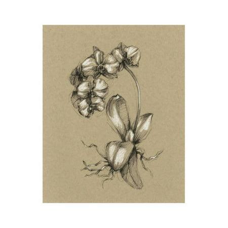 Botanical Sketch Black and White V Print Wall Art By Ethan Harper