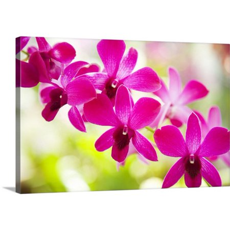 Great BIG Canvas Dana Edmunds Premium Thick-Wrap Canvas entitled Hawaii, Closeup Of Orchid