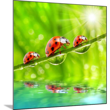 Funny Picture Of The Ladybugs Family Running On A Grass Bridge Over A Spring Flood Wood Mounted Print Wall Art By Kletr
