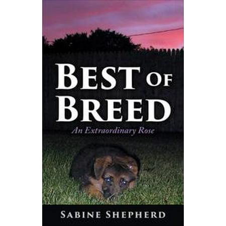 Best of Breed an Extraordinary Rose - eBook