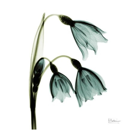 3 Arm Tulip - Three Tulips in Green Art Print  By Albert Koetsier