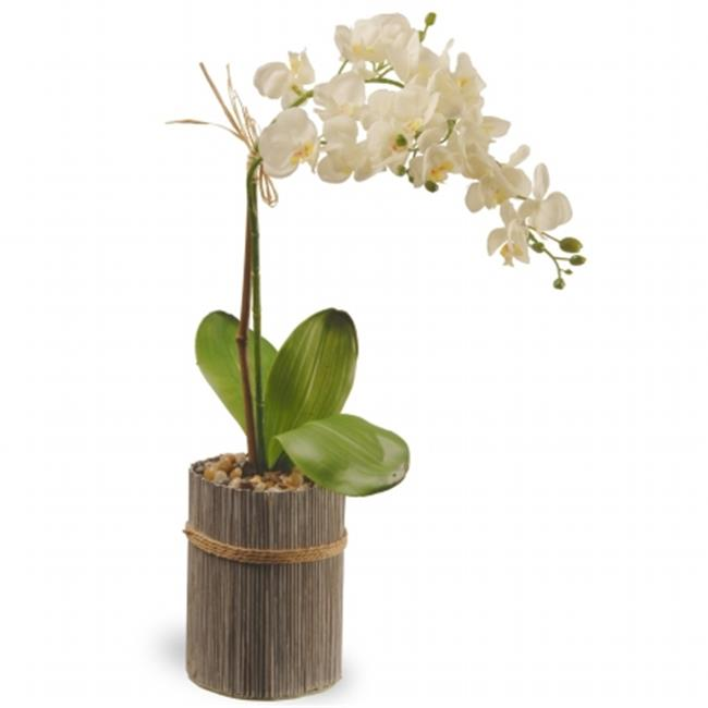 National Tree  20 in. Potted Orchid - White