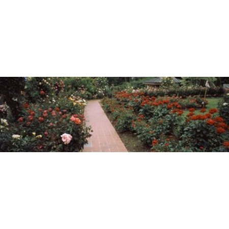 Assorted roses in a garden International Rose Test Garden Washington Park Portland Multnomah County Oregon USA Canvas Art - Panoramic Images (18 x 6)
