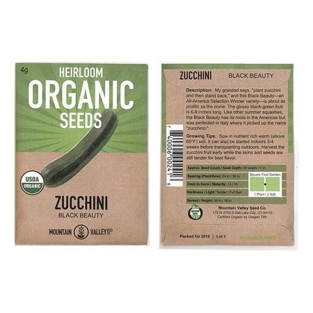 Sunburst Squash Seed - Black Beauty Zucchini Summer Squash Garden Seeds - 4 Gram Packet - Non-GMO, Heirloom, Organic - Vegetable Gardening Seed