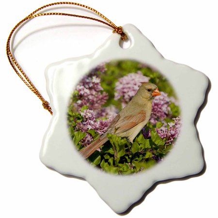 (3dRose Northern Cardinal female in Lilac bush, Marion, Illinois, USA. - Snowflake Ornament, 3-inch)