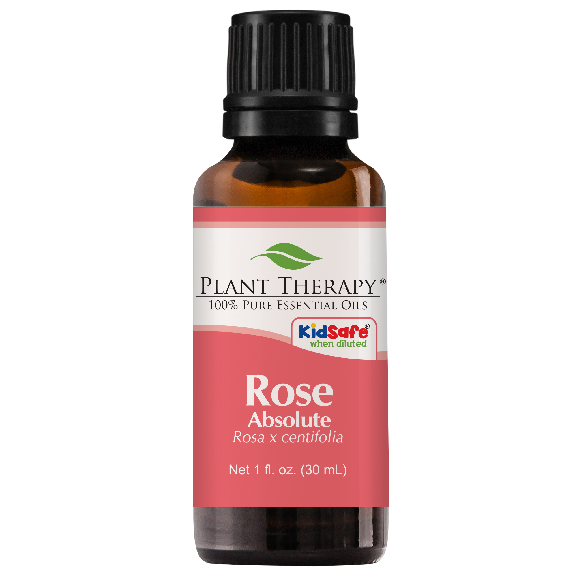 Plant Therapy Rose Absolute Essential Oil | 100% Pure, Undiluted, Natural Aromatherapy | 30 mL