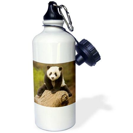 3Drose China  Wolong Panda Reserve  Baby Panda Bear On Stump As07 Aga0001   Alice Garland  Sports Water Bottle  21Oz