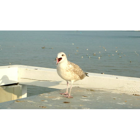 Framed Art For Your Wall The Baltic Sea Sopot The Pier Seagull Bird 10x13 Frame ()