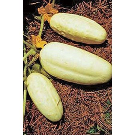 Cucumber White Wonder Great Heirloom Vegetable 30 Seeds