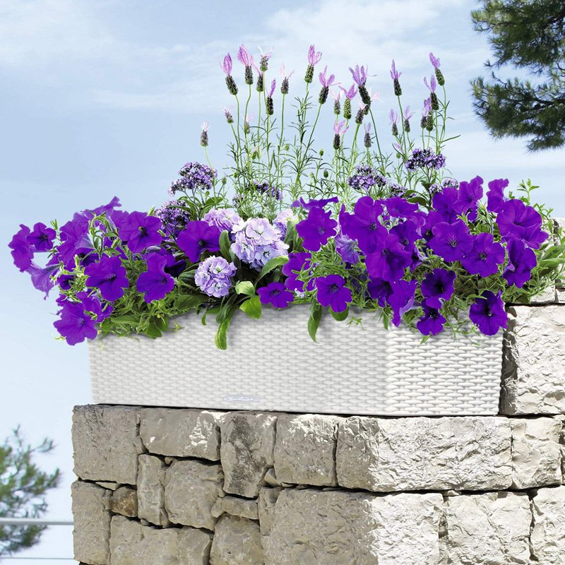 Rectangle Lechuza Balconera Cottage Self-Watering Resin Planter with Optional Brackets
