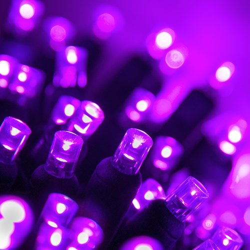 """70 Purple 5mm LED Christmas Lights, Green Wire, 4"""" Spacing"""