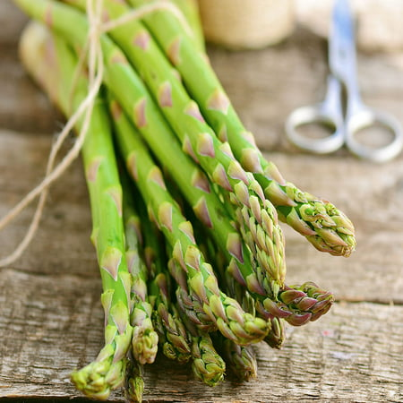 Asparagus Jersey (Jersey-Knight 5 Live asparagus bare root plants -2yr-crowns )