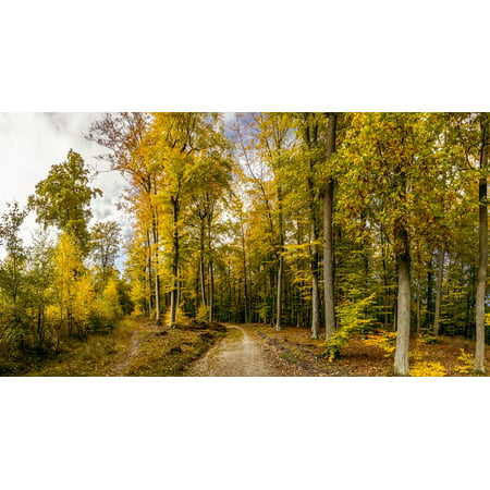 Laminated Poster Autumn Forest Tricity Landscape Park Forest Road Poster Print 24 X 36