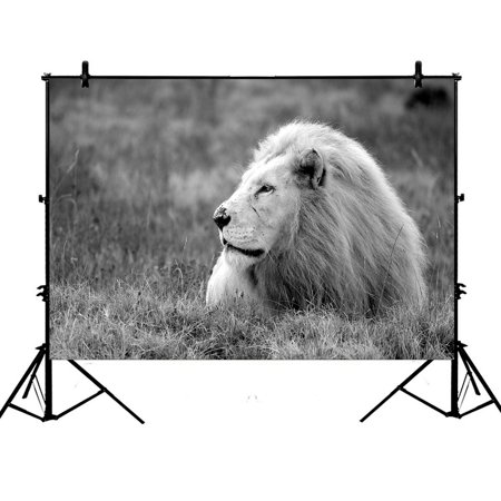 PHFZK 7x5ft Wildlife African Lion Photography Backdrops Polyester Photo Background Studio Props - Detroit Lions Background