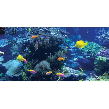 Fluorescent Decorative Ceiling Light Covers - 2ft x 4ft film - Tropical Reef - Light Cover