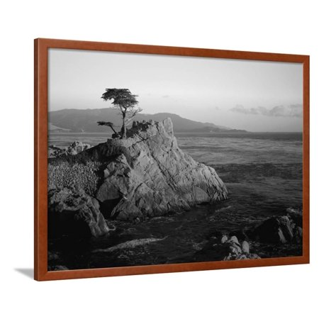 Lone Cypress Tree on Rocky Outcrop at Dusk, Carmel, California, USA Framed Print Wall Art By Howell Michael