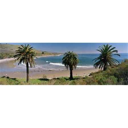 Panoramic Images PPI98374L High angle view of palm trees on the beach  Refugio State Beach  Santa Barbara  California  USA Poster Print by Panoramic Images - 36 x