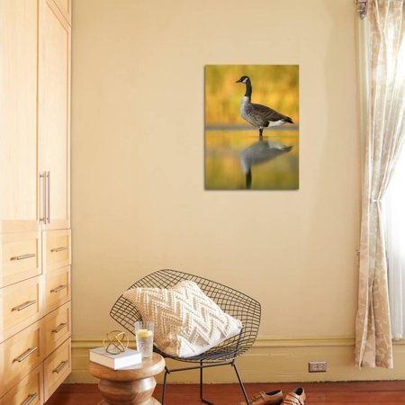 Best Portrait of Canada Goose Standing in Water, Queens, New York City, New York, USA Print Wall Art By Arthur Morris deal