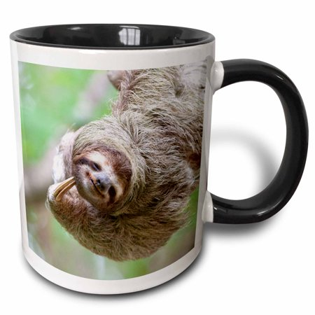 3dRose Brown-Throated Sloth wildlife, Corcovado Costa Rica - SA22 JGS0017 - Jim Goldstein, Two Tone Black Mug, 11oz