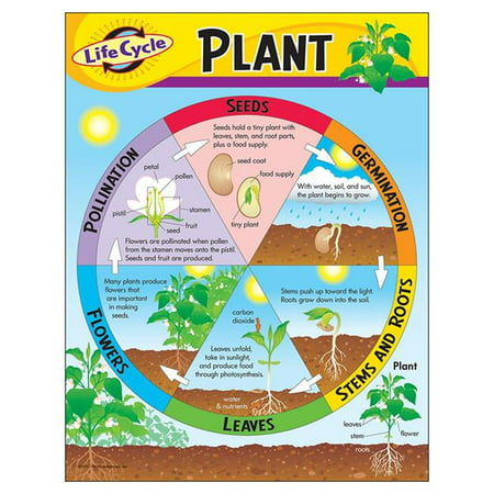 Trend Enterprises T-38179BN 17 x 22 in. 6 Piece Life Cycle of a Plant Learning Chart - image 1 de 1