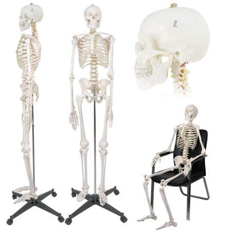 "Zeny Life Size 70.8"" Human Skeleton Model Medical Anatomical with Rolling Stand, Removable and Movable Parts"