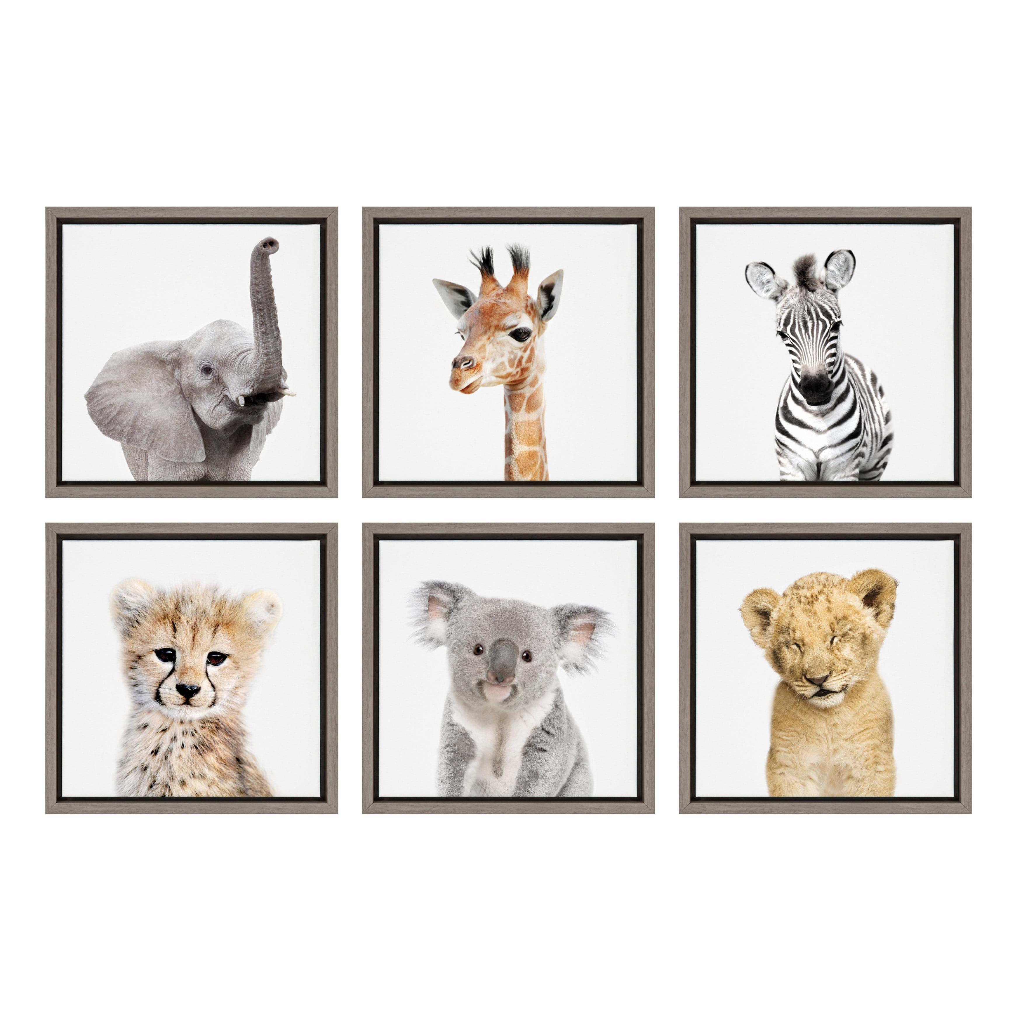 Kate and Laurel Sylvie Wildlife Safari Animal Print Photo Portraits: Elephant, Giraffe, Zebra, Cheetah, Koala and Lion Framed Canvas Wall Art by Amy Peterson, 13x13 Gray, Set of 6