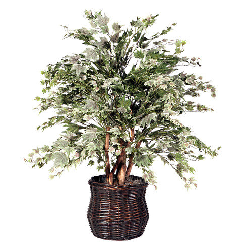 4 ft. Extra Full Tree Silver Maple / Rattan