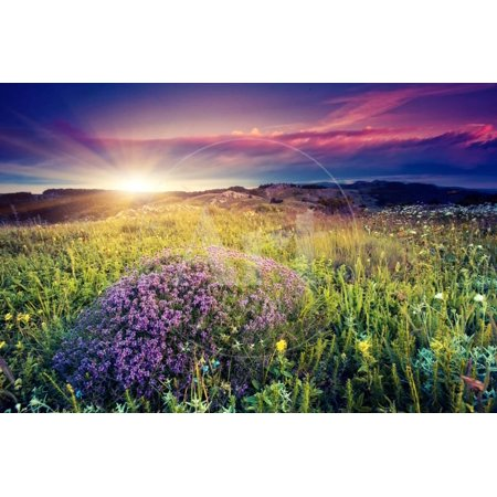 Magic Flowers in Mountain Landscape with Dramatic Overcast Sky. Carpathian, Ukraine, Europe. Beauty Print Wall Art By Leonid