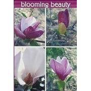 Blooming Beauty Spring Garden Flag