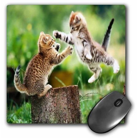 Func Mouse Pad (3dRose Kittens Having Fun, Mouse Pad, 8 by 8 inches )