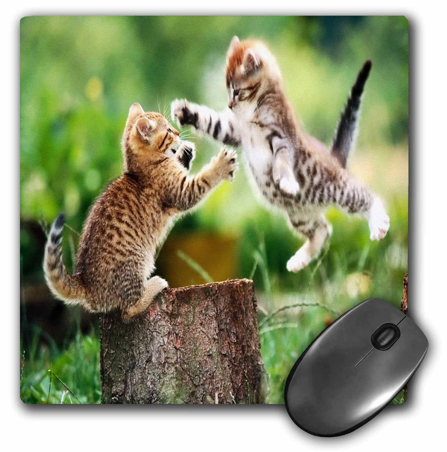 3dRose Kittens Having Fun, Mouse Pad, 8 by 8 inches