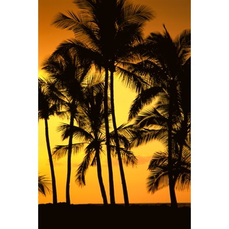 Hawaii Big Island View Of Palm Trees Silhouetted By Fiery Sunset Canvas Art - Greg Vaughn  Design Pics (12 x 19)