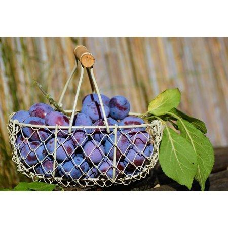 - LAMINATED POSTER Fruits Violet Plums Fruit Fruit Basket Ripe Poster Print 24 x 36