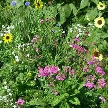 Northeast Wildflower Mix - 7 Gram Packet - Seeds ~50 Sq. Ft. - Non-GMO, Open Pollinated - Mix of Annuals & Perennials - Northeastern USA Region