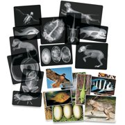 Roylco, RYLR5910, Animal X-Rays, Set of 14