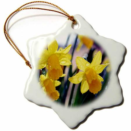 Daffodil Ornament - 3dRose Daffodils After a Rain Daffodils with water drops - Snowflake Ornament, 3-inch