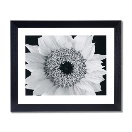 Yellow Sunflower B/W Photo Wall Picture Black Framed Art Print