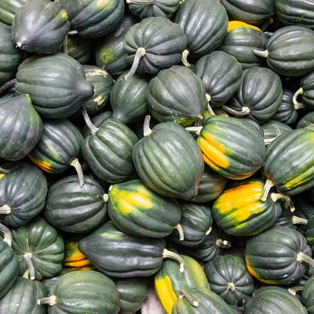 Table Queen Acorn Winter Squash Garden Seeds - 1 Oz - Heirloom, Non-GMO - Vegetable Gardening Seed by Mountain Valley Seeds