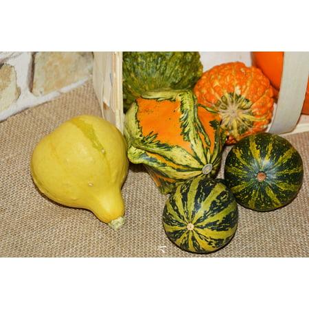 LAMINATED POSTER Autumn Decoration Decorative Squashes Pumpkins Poster Print 24 x 36 ()