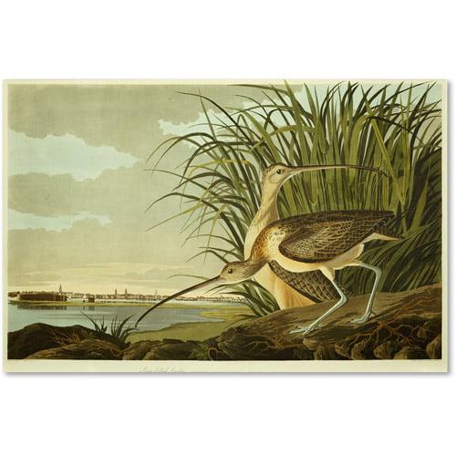 """Trademark Fine Art """"Long Billed Curlew"""" Canvas Art by John James Audubon"""