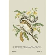 Buy Enlarge 0-587-13537-9P12x18 Indian Squirrel and Tamarind- Paper Size P12x18