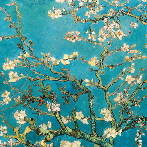 "Click here to buy Almond Blossom 24"" x 24"" Canvas Wall Decor."